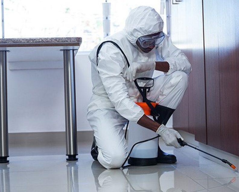 Engager un professionnel en désinfection pour un environnement plus sain